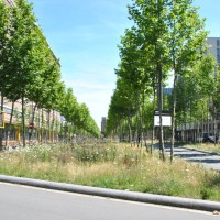 Meerstammige boom past prima in natuurlijke tuin