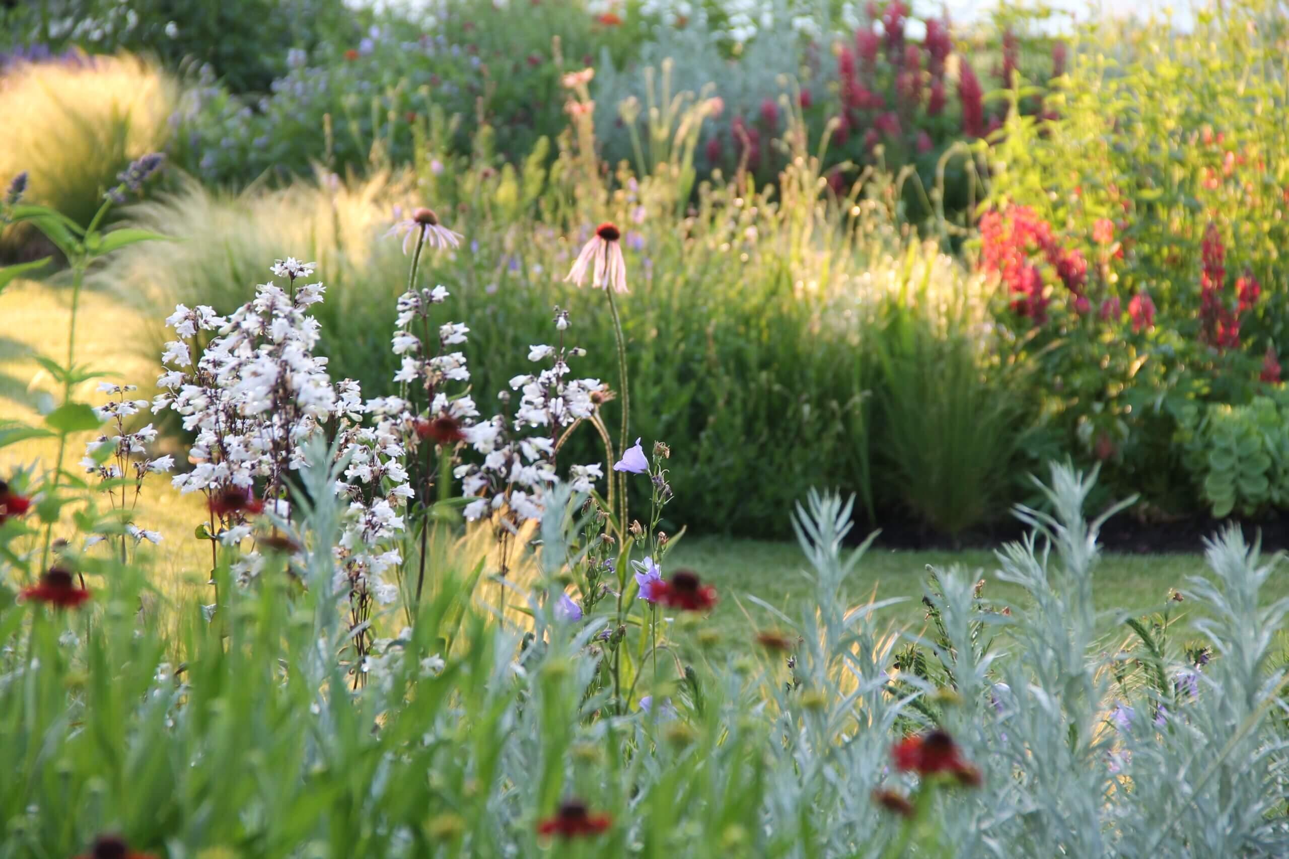 Vlinder-en vogelvriendelijke tuin bij woonboerderij in Hellendoorn