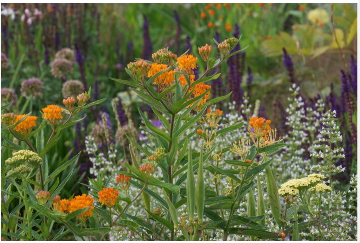 Amerikaanse tuinontwerper Adam Woodruff ontwerpt zijn eigen tuin
