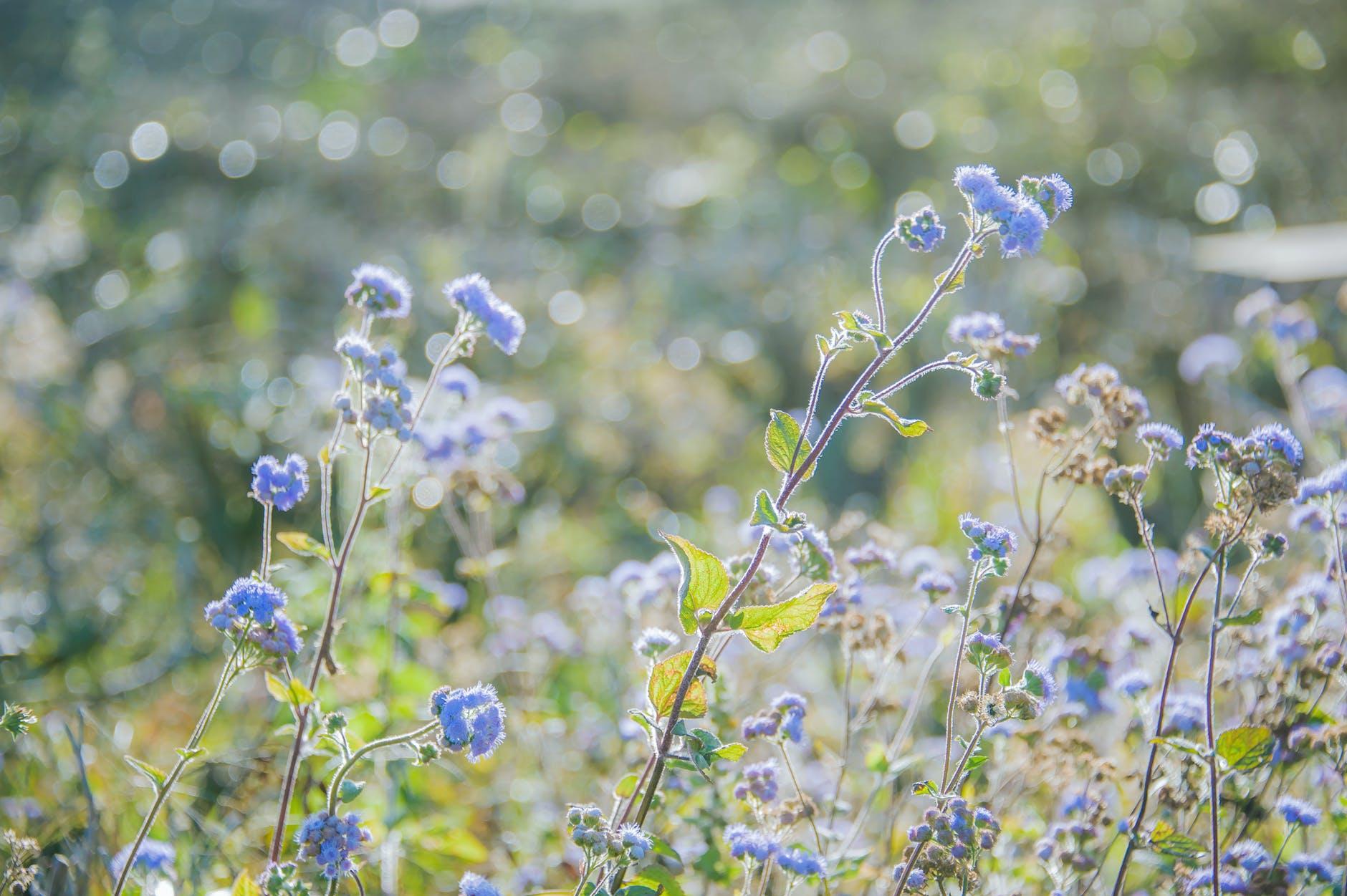 Het mysterie van de blauwe bloem: de zeldzame kleur van de natuur