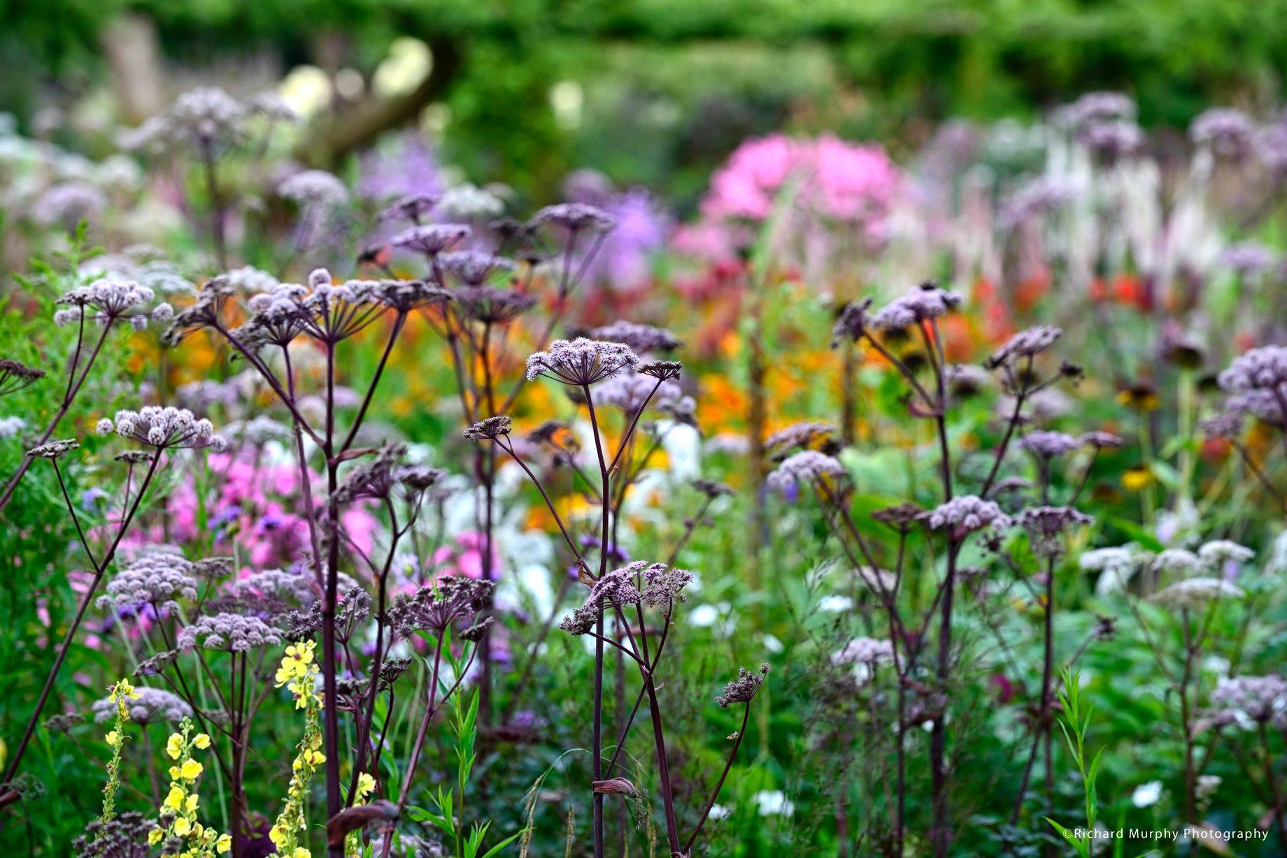 June Blake's tuin in Ierland van aparte schoonheid