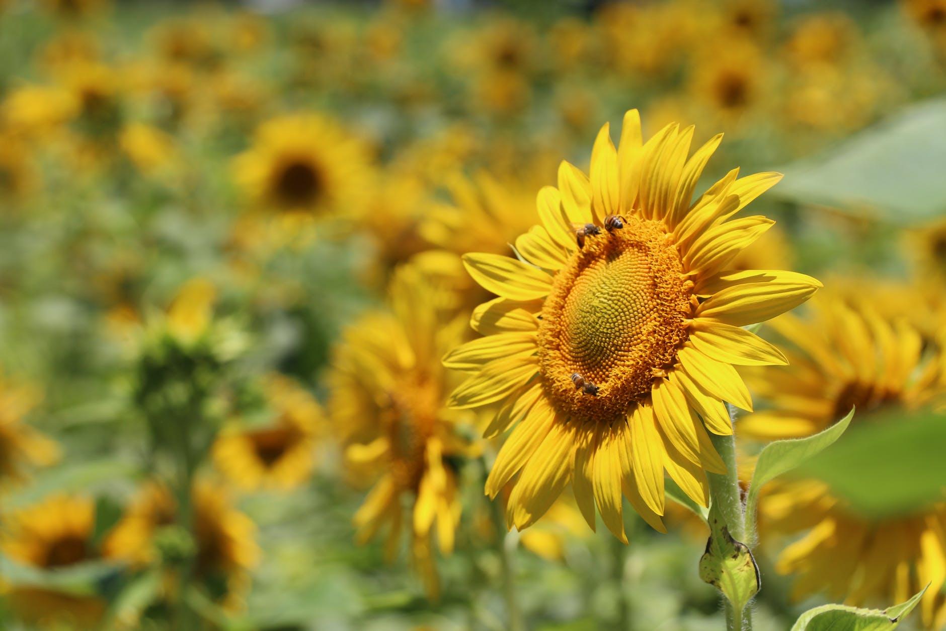 Met de juiste planten een 'jaarrond' bijen in de tuin of balkon