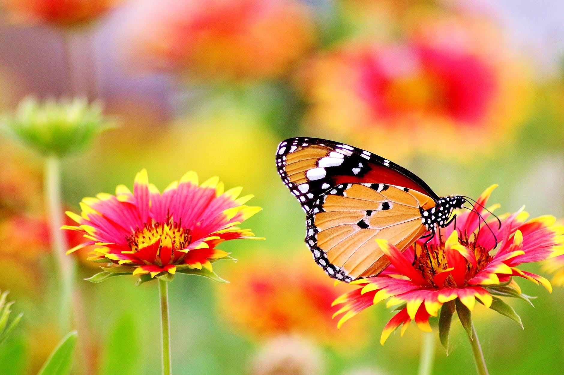 Duurzaamheid en biodiversiteit horen bij de tuin van nu